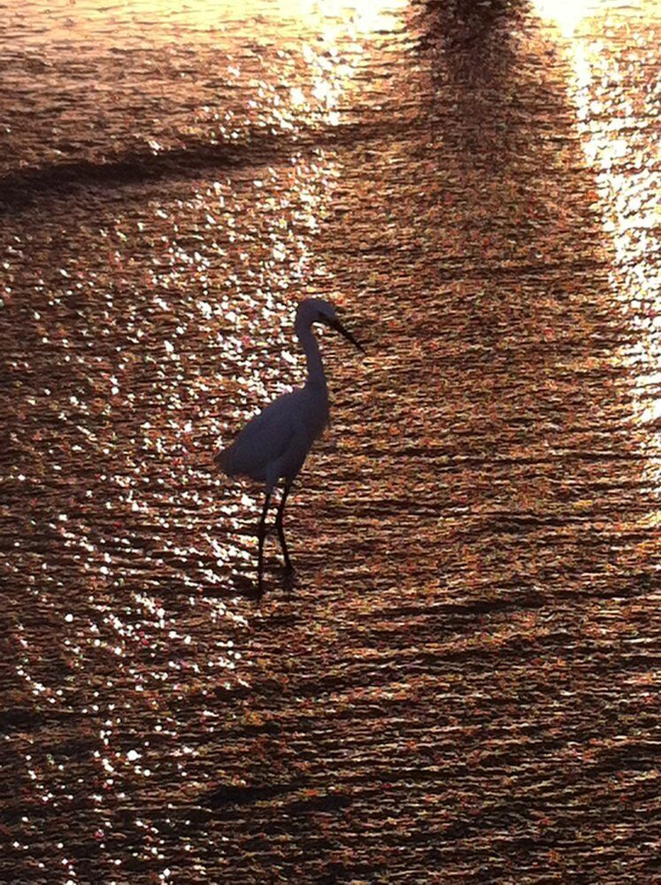 You never know what you'll find in a pool of tranquility. You may even make a new friend. #venice #losangeles #cali #socal #beach #sunset #pacific #birds