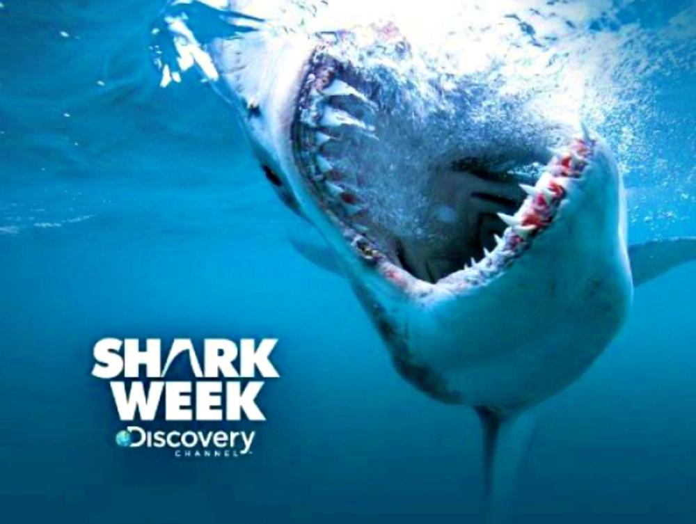 Shark Week Best Moments
