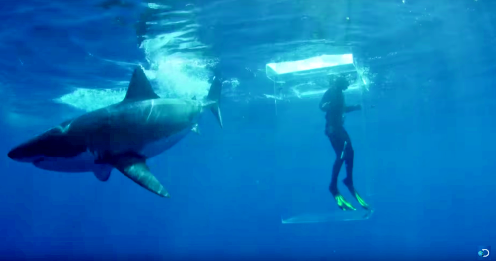 1. THE GLASSCAGE - Discovery Channel pushed the boundaries when they put surfer Dicky in a glass cage to see if the shark would attack...