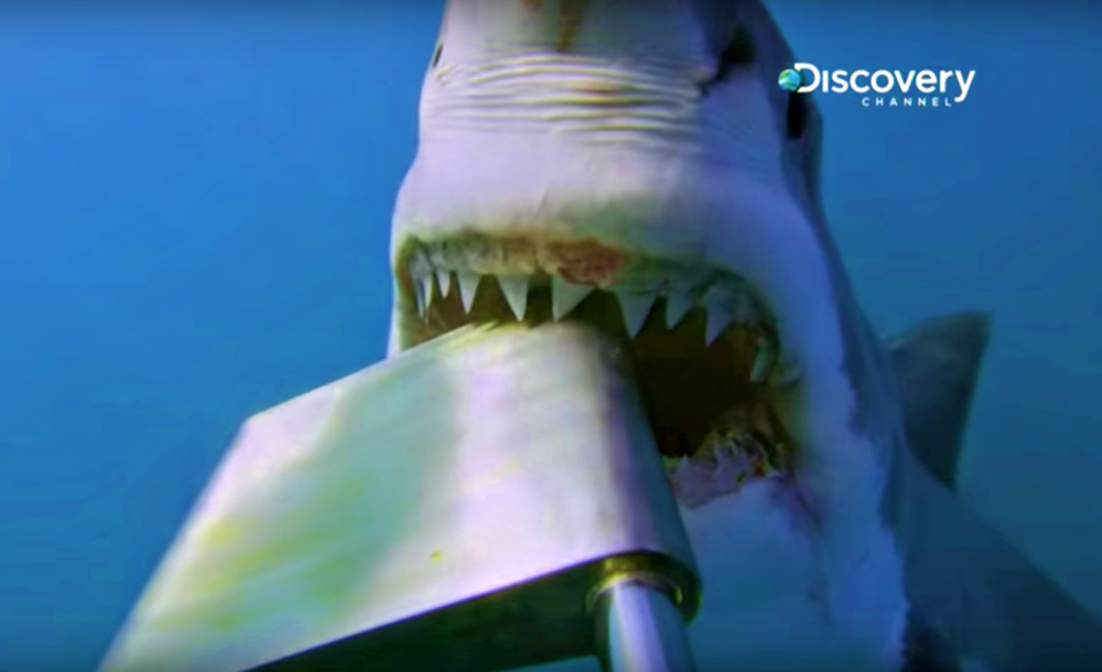 2. Two Sharks Attack Cameraman. - Shark Week videographers are always taking risks when filming predators such as the great white shark. This time it was a close call...