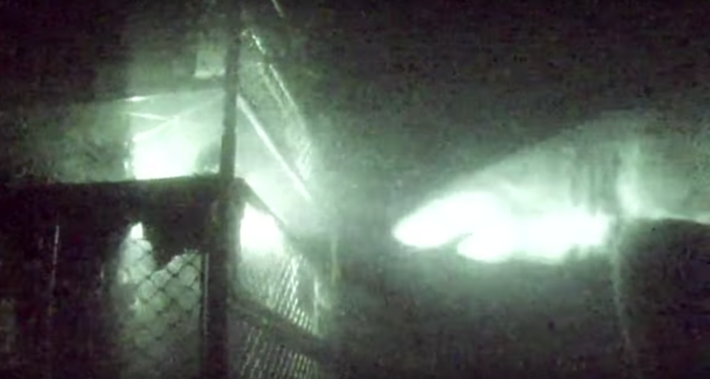 4. NIGHT TIME FEEDING FRENZY - Everyone knows not to enter the water during the night as this is when sharks hunt their prey. However, Shark Week dedicated an entire episode to the sharks nighttime feeding behaviour. Unfortunately, the shark mistook the metal cage for its nighttime snack!