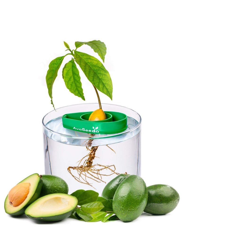 9. grow your own avocado tree - This is the ultimate present! What better way to feed your avocado habit then by growing your own. Organic, tasty and a perfect addition to any living room.