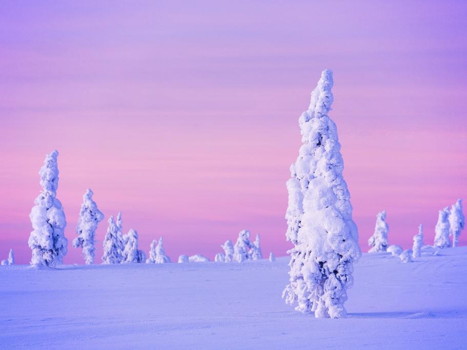 Kakslauttanen Frozen Trees 2.jpg