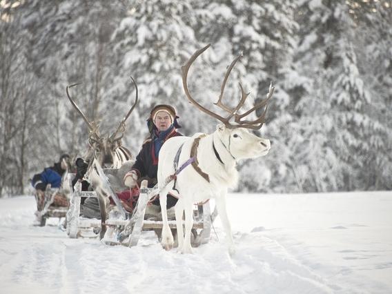 Reindeer safari Kakslauttanen 3 (1).jpg