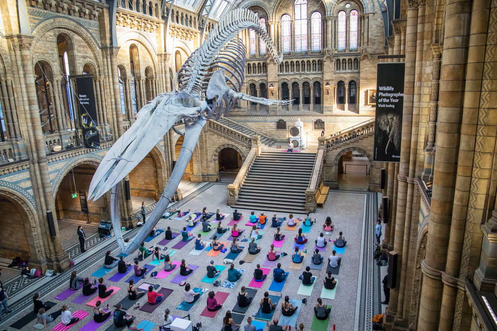 Yoga in Hintze Hall, Natural History Museum 6.jpg