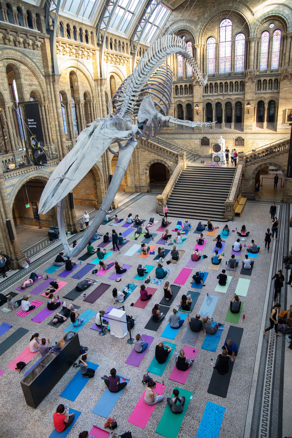 Yoga in Hintze Hall, Natural History Museum.jpg
