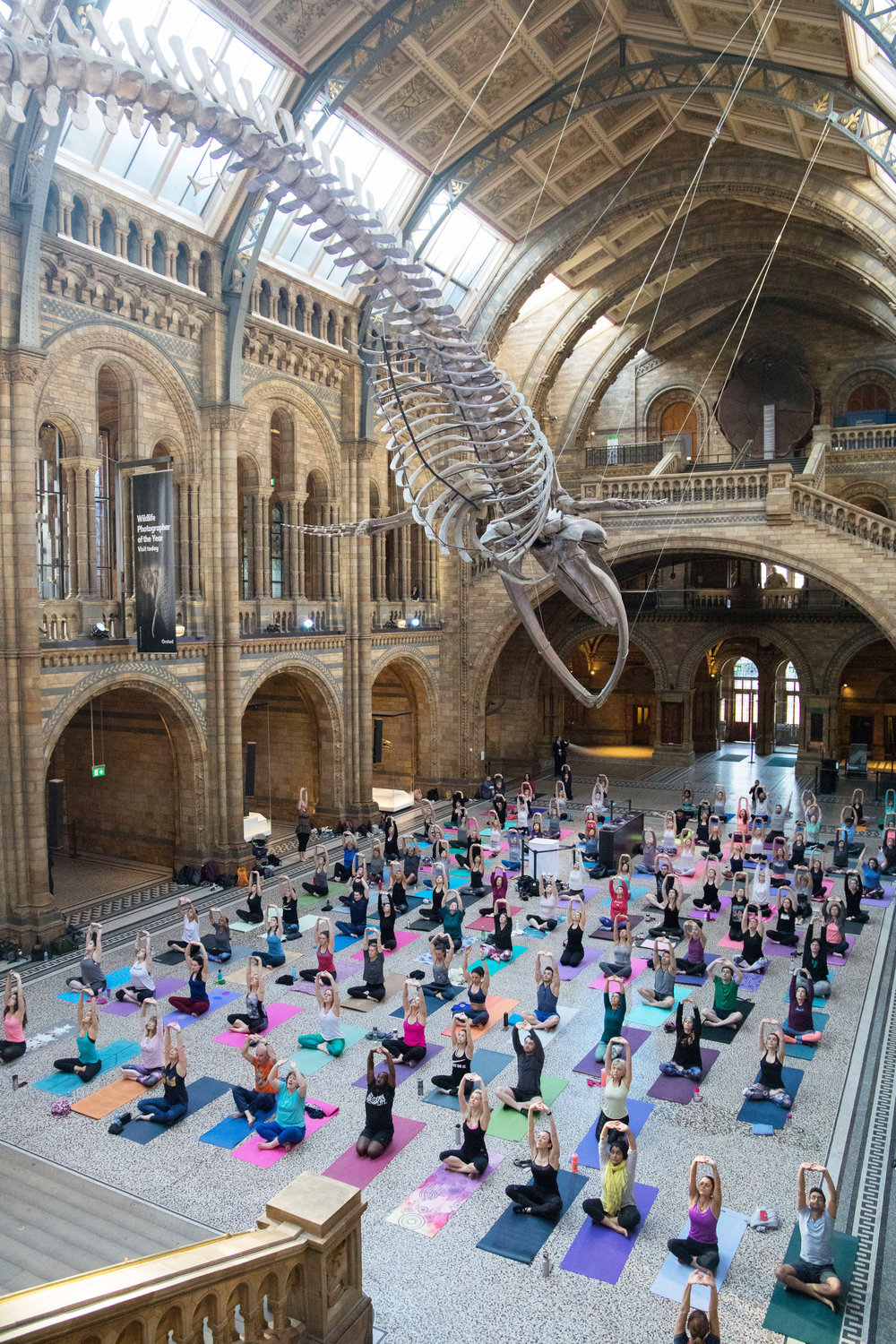 Yoga in Hintze Hall, Natural History Museum 3.jpg