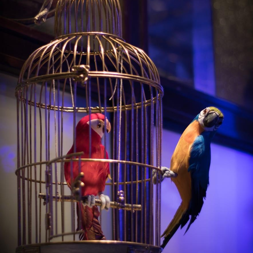 The Parrot - credit Anna Wudkowska  (4).jpeg