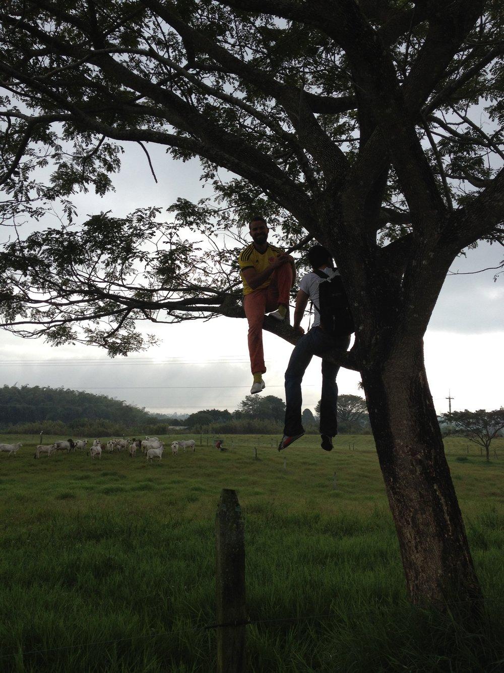 ben finca tree.jpg