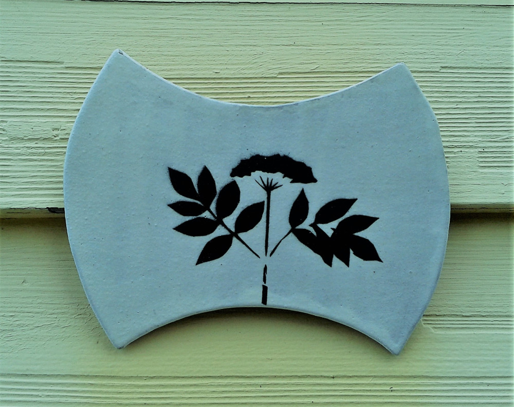 Elder Flower - the 'Complete Medicine Chest'.