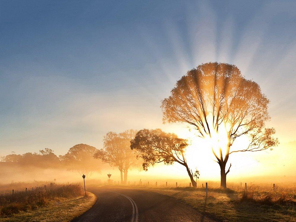 sunrise-road-tree.jpg