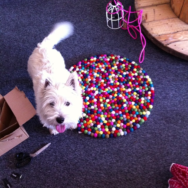 Meet Hamish! Store mascot extraordinaire and all round cute doggie!