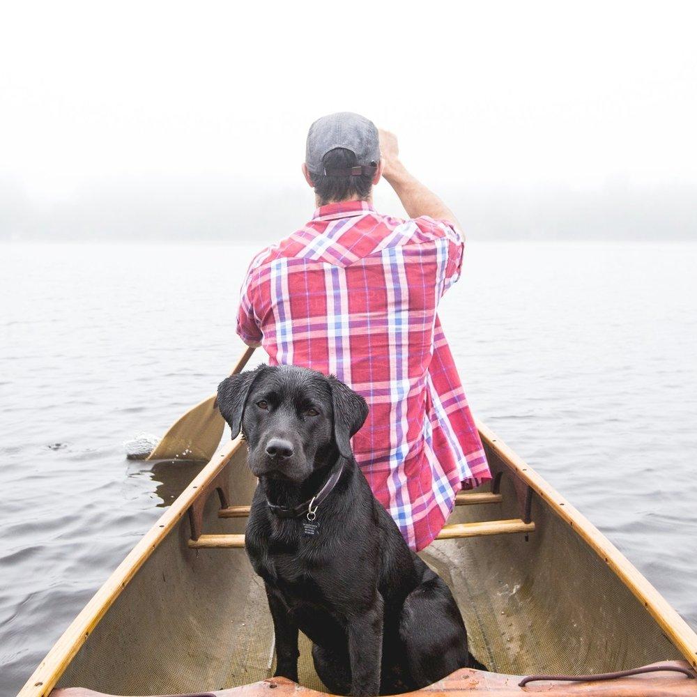 Adventure Dog -