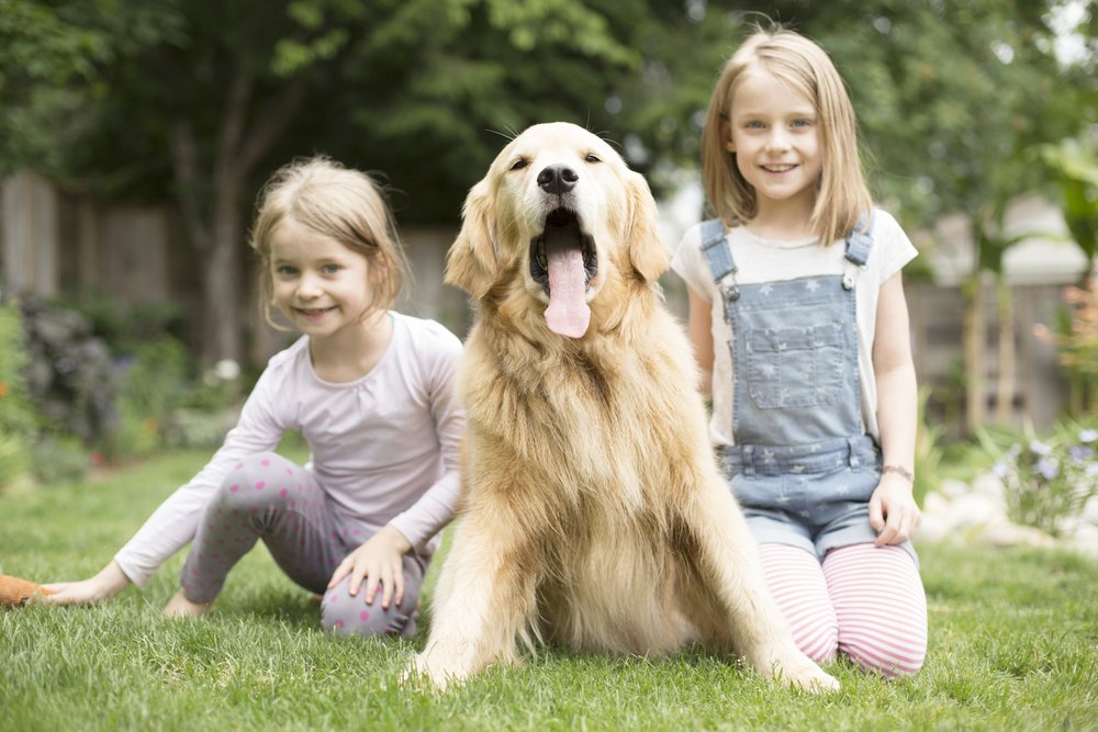Family Pet -