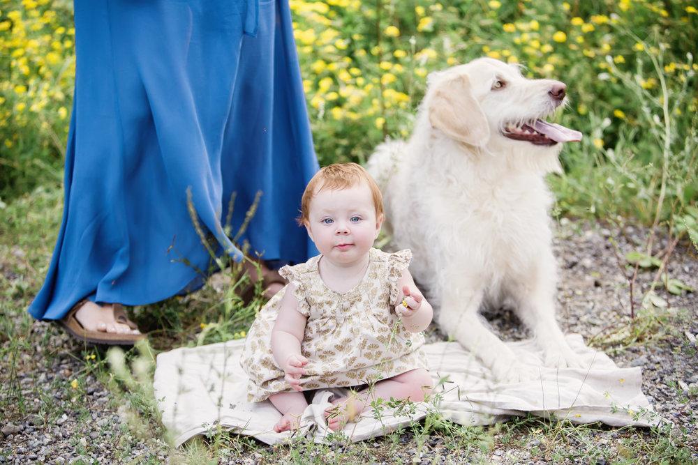 family dog.jpg