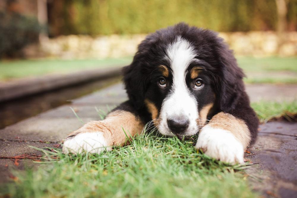 puppyclass.jpg