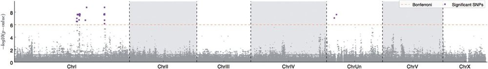 Significant genotype-phenotype associations from GWAS studies of pH tolerance in  Pristionchus pacificus . Figure 4 in  article .