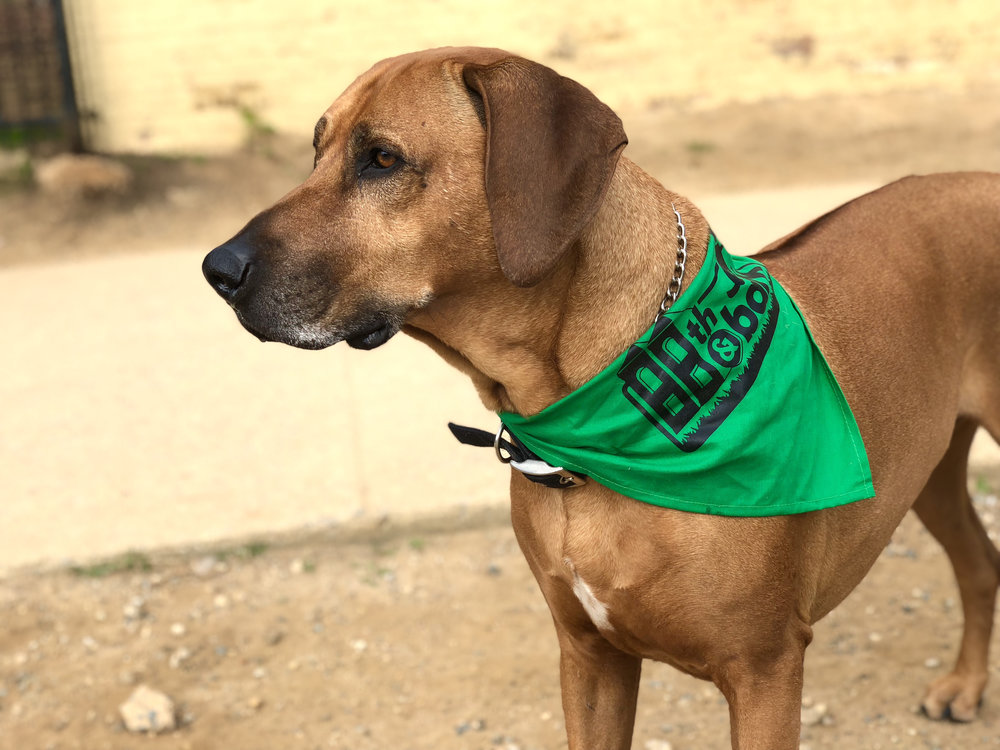 You can still get a dog bandana like Picasso's if you donate $10 or more.  Email us  for info