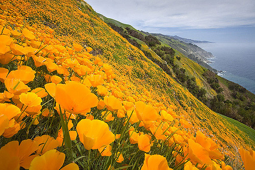 ticket for two:big sur -