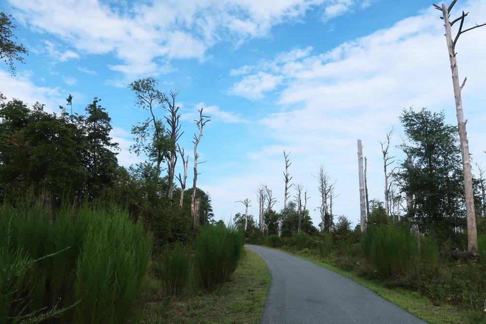 Woodland Trail (aka mosquito apocalypse) | 蚊子大本營