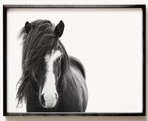 The Crown Prints Icelandic Horse Print