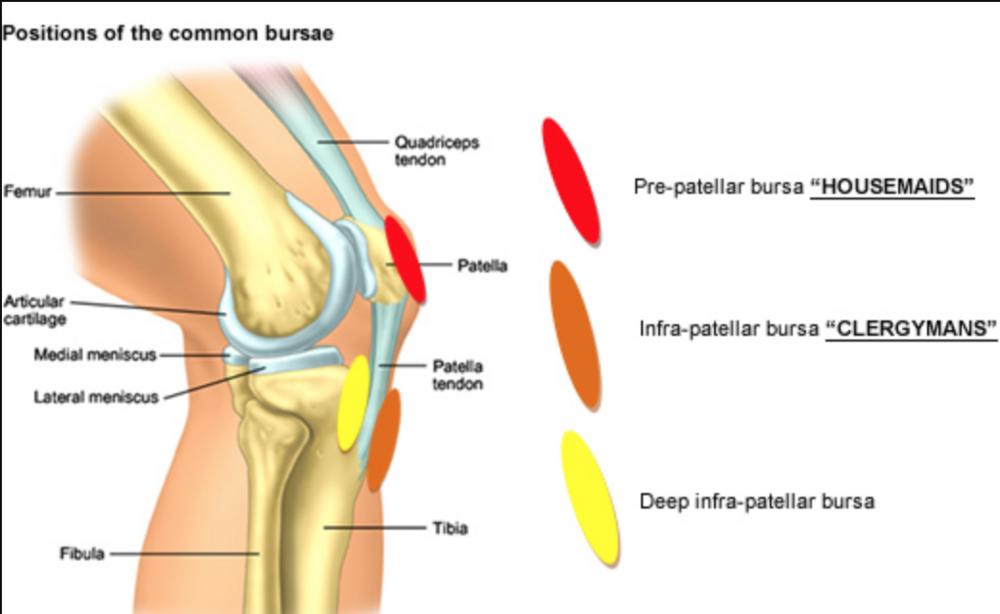 Kneeling Knee Pain — BJJ Rehab