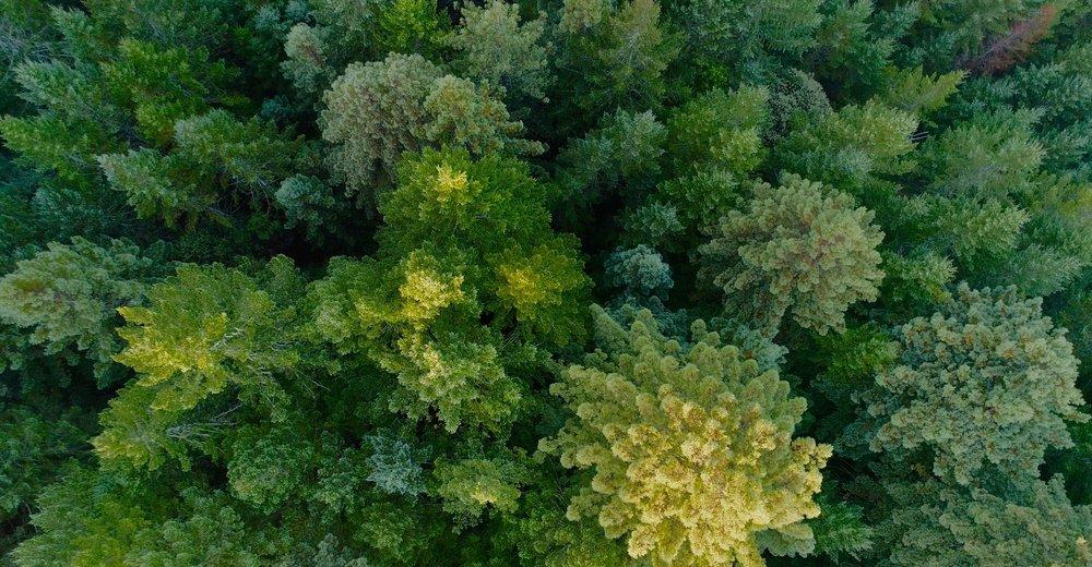 Community of trees