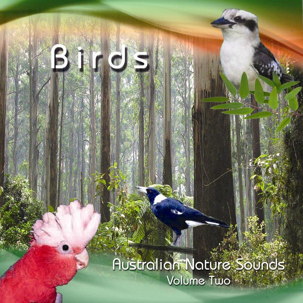 NM+2+Birds+1.jpg