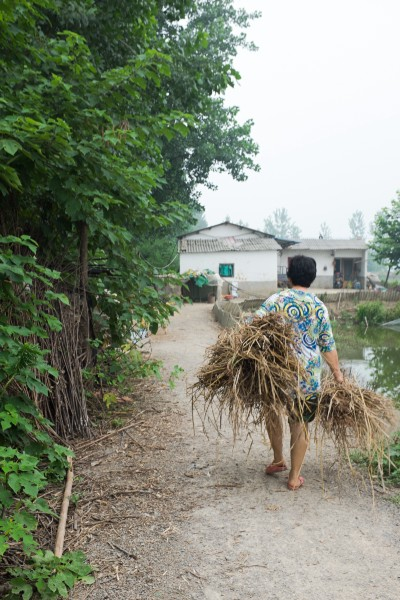 Mrs Yang, the wife of a fish farmer, walks home with hay for her small herd of goats.