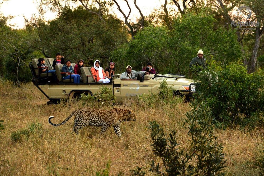 kapama-wildlife-443.jpg