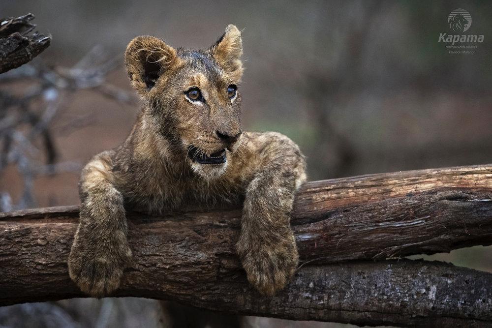 kapama-wildlife-422.jpg