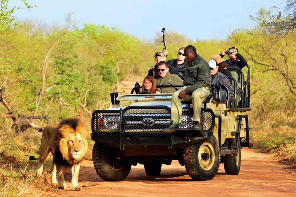 kapama-wildlife-474.jpg