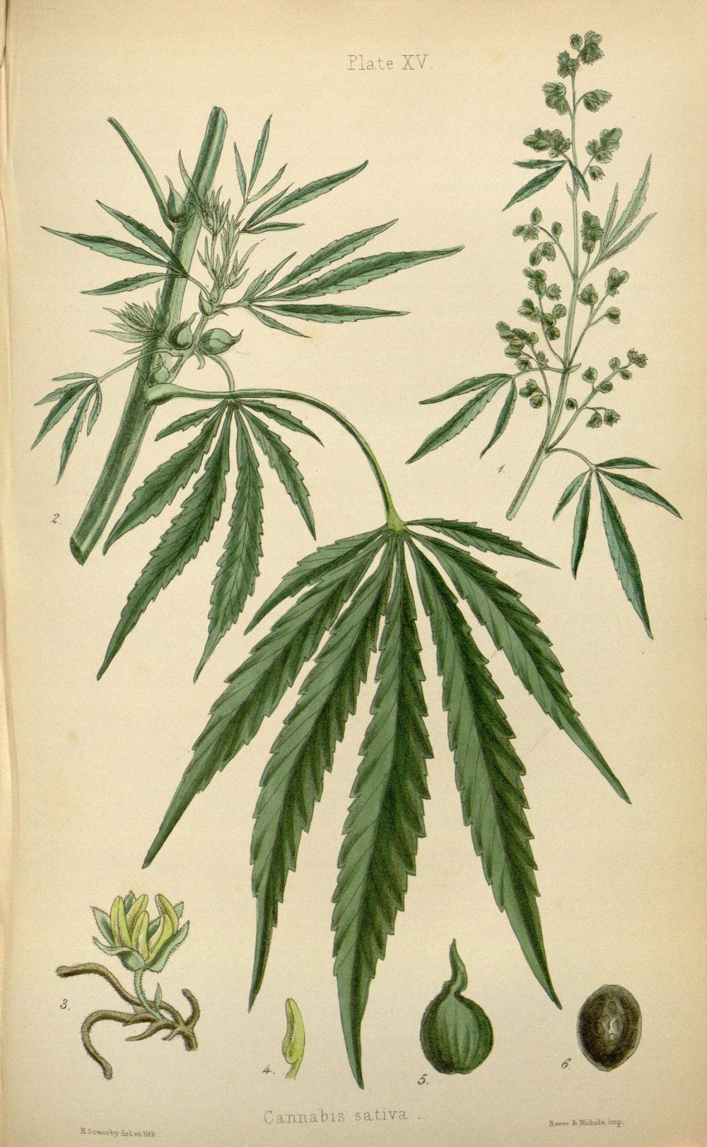 The_flora_homoeopathica_(8260577231).jpg