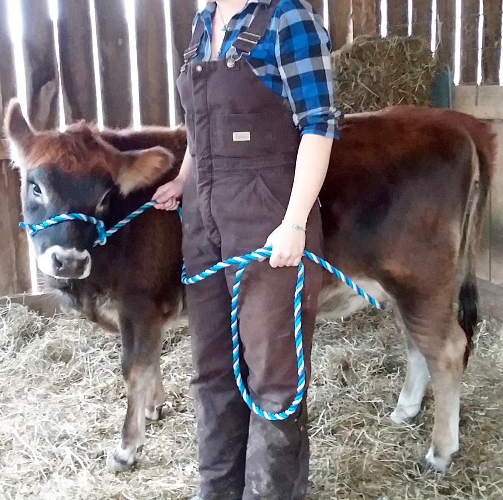 1 year old mid-mini heifer