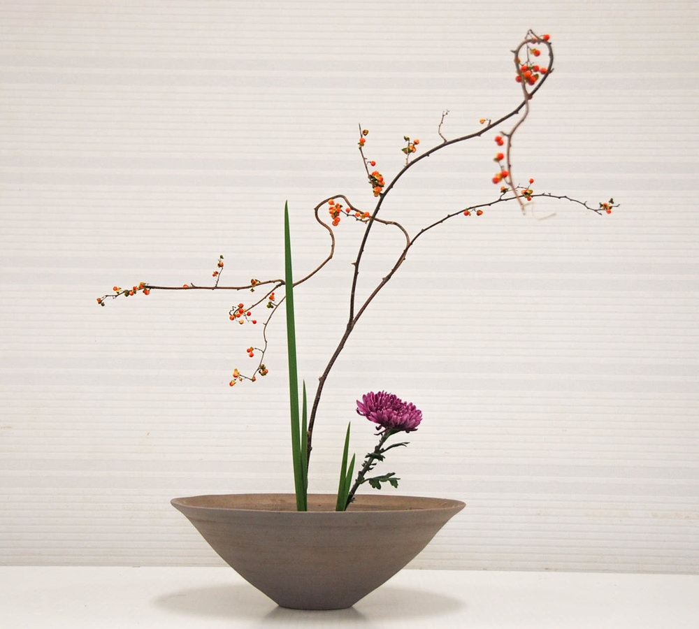 1 sho shimp kronk bes tak en chrysant japan.jpg