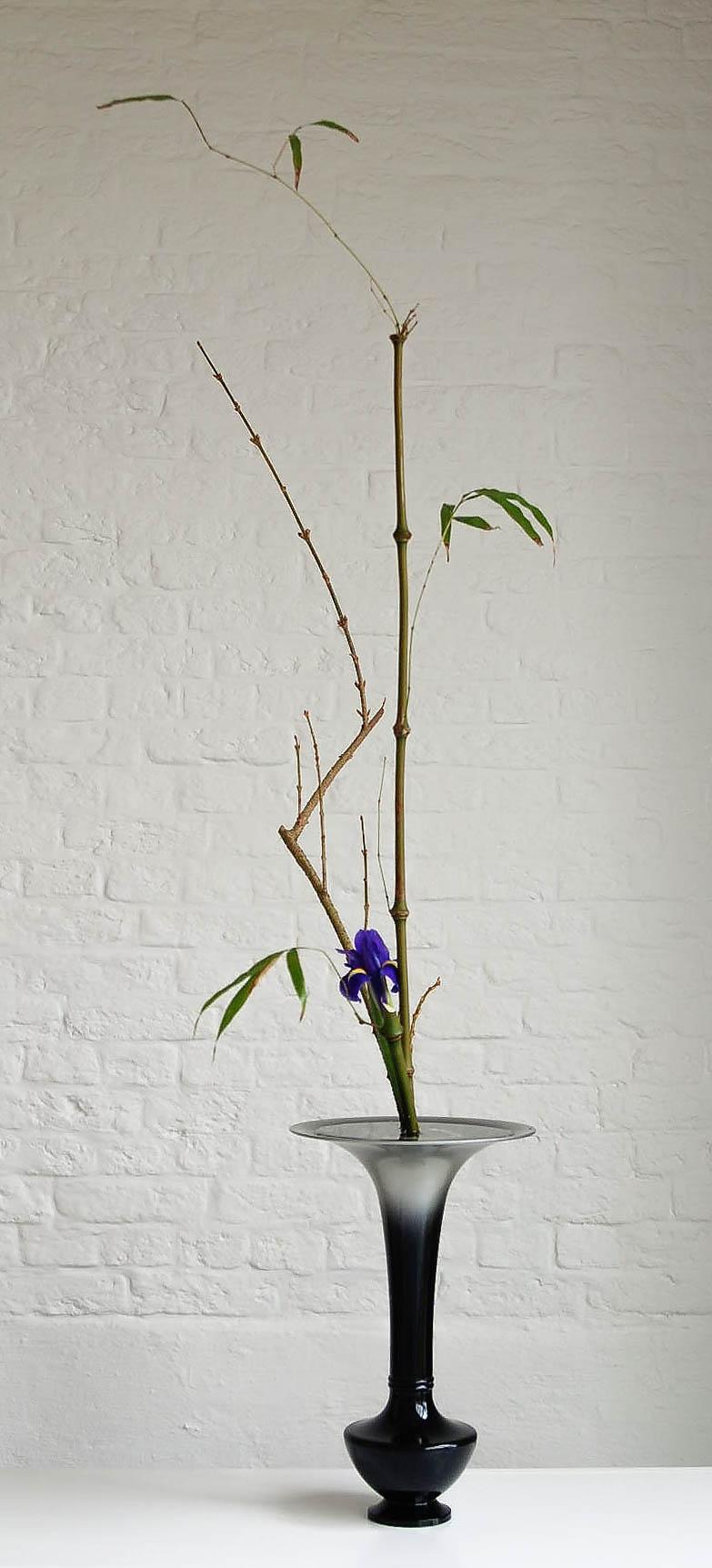 7 sho shim bamboe fors iris.jpg