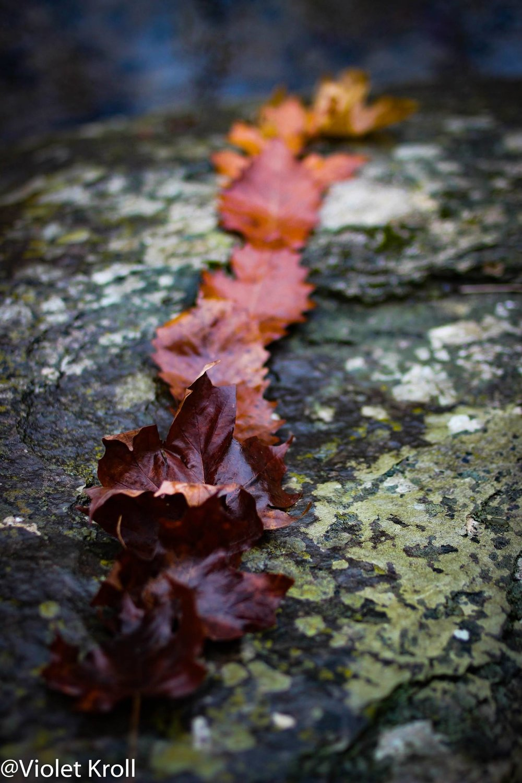 leafpath.jpg