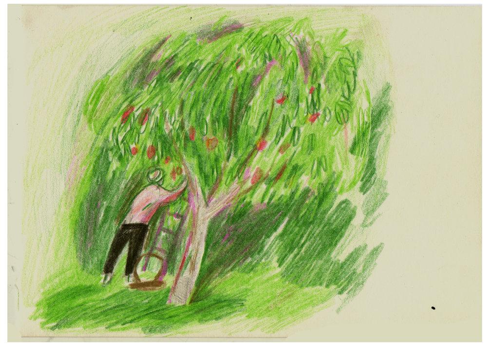 CMBYN tree.jpg