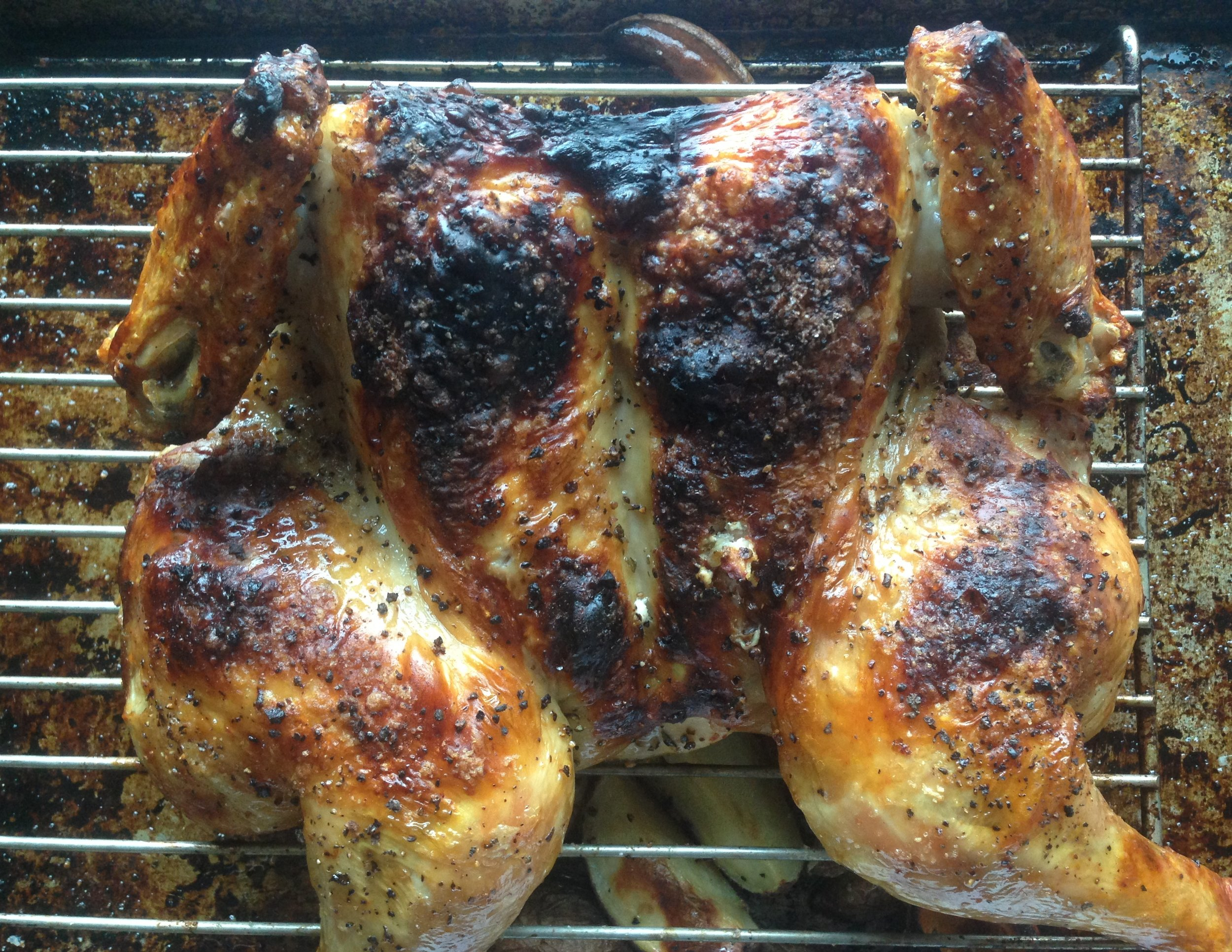 Greek Roasted Chicken Out of Oven