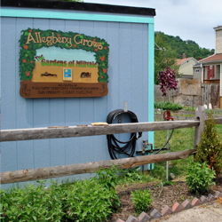 ALLEGHENY GROWS:                    GARDENS OF MILLVALE