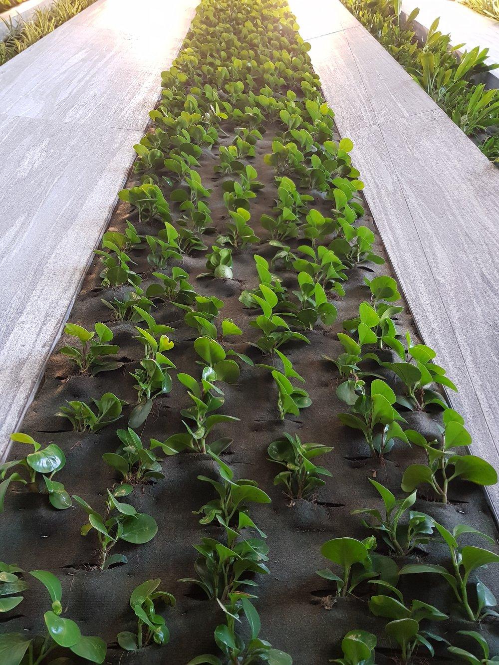 Plantica_Corporativo_enlace_11.jpg