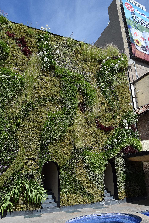 Plantica Quinta Real 5