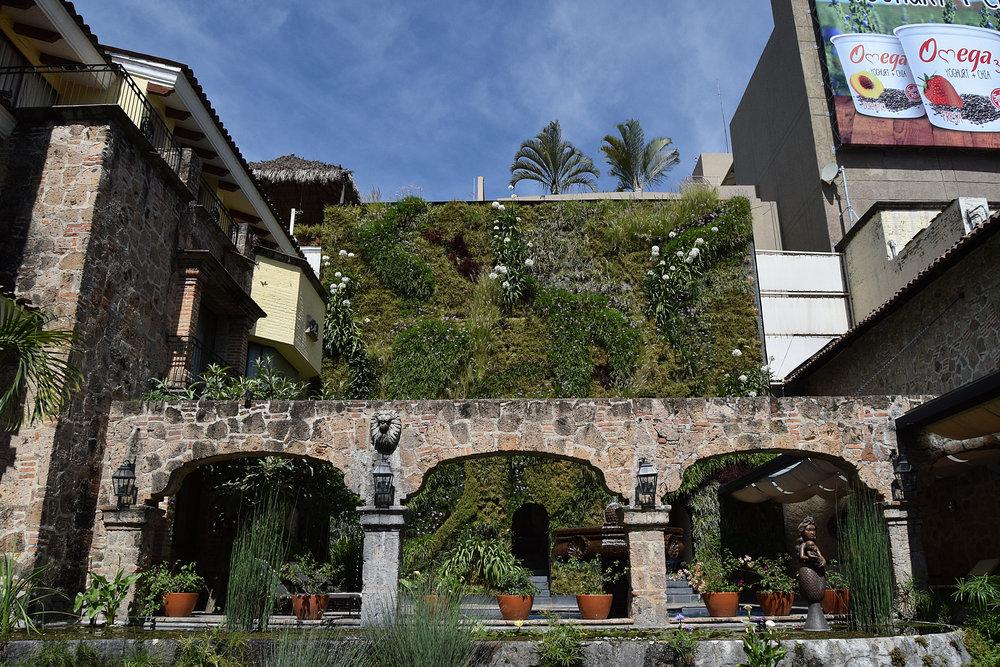 Plantica Quinta Real 9