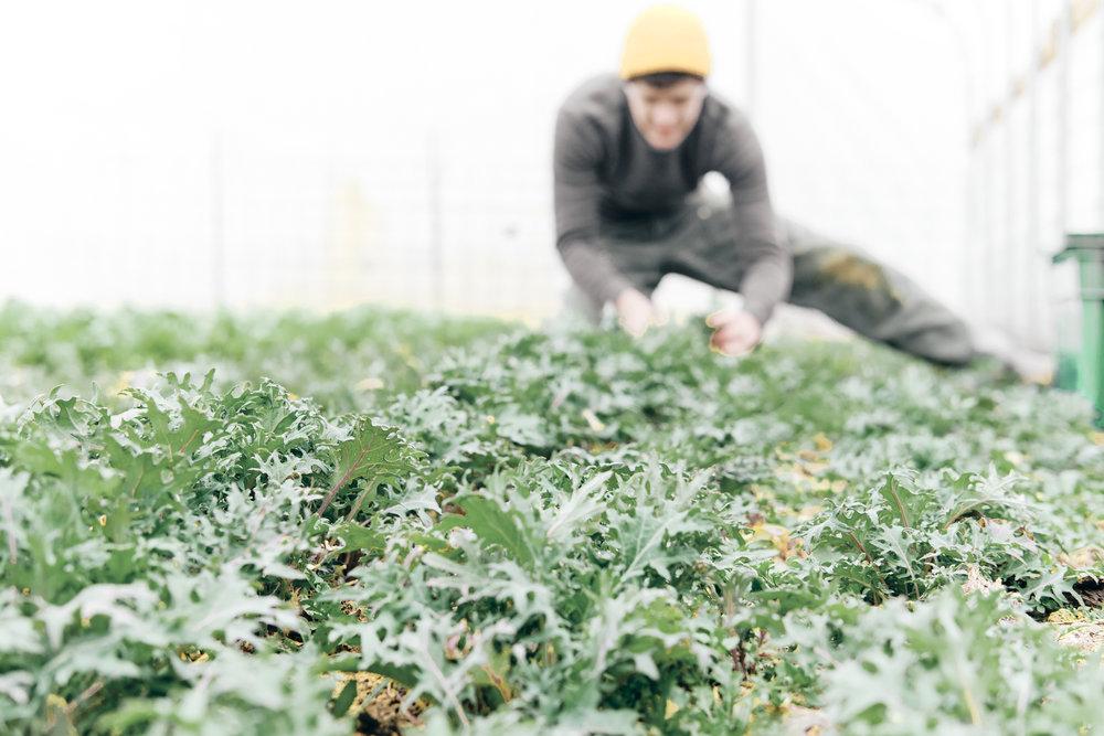 Veggies, Fruit and Flowers -