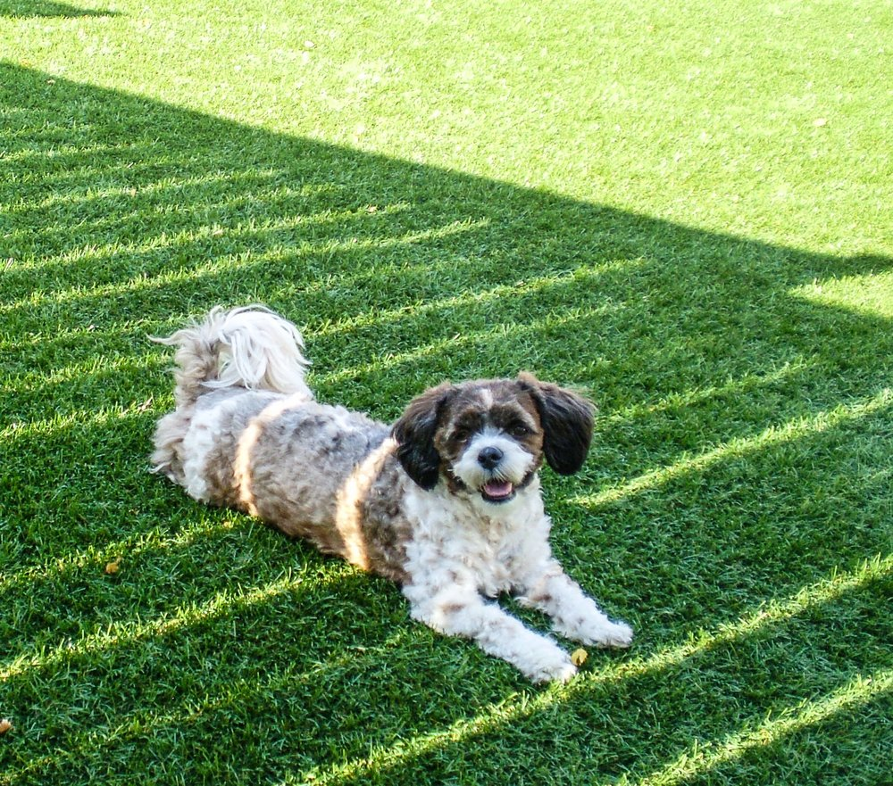 Pet-Friendly Lawn using Perfect Turf