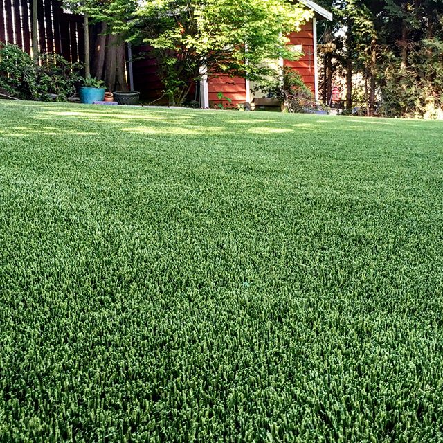 Another Perfect Turf customer with a stunning lawn to show off just in time for this awesome weather we're having! With Perfect Turf you can have a beautiful and eco-friendly lawn to make you the best backyard party host on the block. No chemicals/fertilizers required AND our product is made from high-quality, recycled materials♻️. . . Follow the link in our bio to request a quote today. . . . . . . . . . #artificialgrass #yvr #perfectturf #artificiallawn #artificialgrass #perfectlawn #syntheticgrass #greengrassvancouver #beautifullawnvancouver #petturfvancouver #artificialgrassvancouver #artificialturfvancouver #greengrass #beutifullawns #greatlawnyvr #lawnenvy