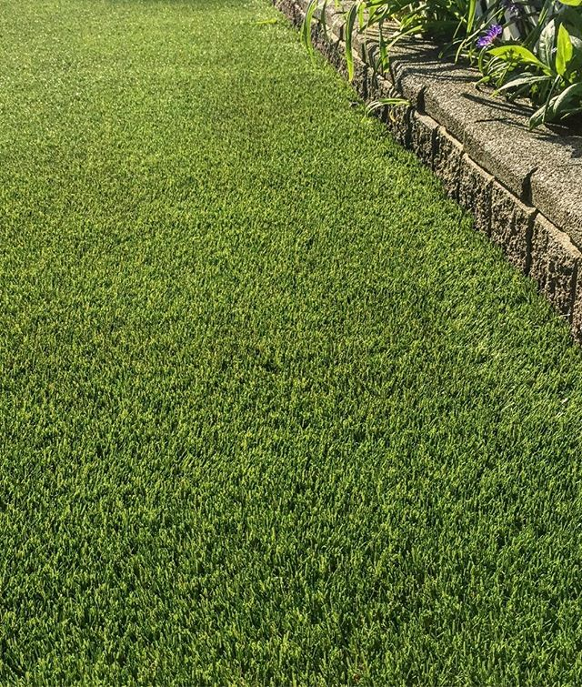Get your lawn ready for it's close up 📷. No mowing. No water. No maintenance. . . Follow the link in our bio to request a quote today. . . . . . . . . . #artificialgrass #yvr #perfectturf #artificiallawn #artificialgrass #perfectlawn #syntheticgrass #greengrassvancouver #beautifullawnvancouver #petturfvancouver #artificialgrassvancouver #artificialturfvancouver #greengrass #beutifullawns #greatlawnyvr #lawnenvy