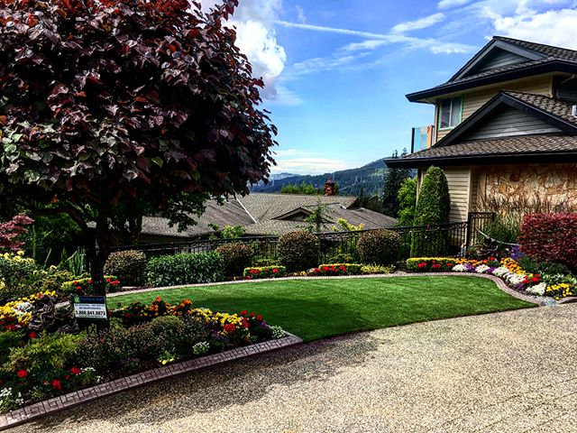 When you have flowers this amazing, you need a lush, green lawn to compliment then! Another happy client in Port Moody 🌱☀️. . . Summer has only just begun; there's still time to get your lawn looking picture-perfect!  Follow the link to request a quote. . . . . . . . . . #artificialgrass #yvr #perfectturf #artificiallawn #artificialgrass #perfectlawn #syntheticgrass #greengrassvancouver #beautifullawnvancouver #petturfvancouver #artificialgrassvancouver #artificialturfvancouver #greengrass #beutifullawns #greatlawnyvr #lawnenvy