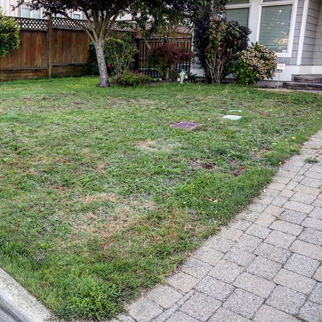 "What an awesome before and after!! We could go on an on about all the great reasons to switch to Perfect Turf, but you don't have to always just listen to us. Take a look at what @housebeautiful says about artificial turf:⁣ ⁣ ""Come summer when real grass is yellowing and yelling out for water, or come winter when the real stuff is turning into more of a mud bath with every game of football the kids play on it, the artificial grass just keeps on giving. And if your pets are forever digging up your lawn, fake grass has the answer. There are specially made grasses for pets, coarser than the standard, which are resistant to the most persistent pet paws. The artificial lawn just sails through all the challenges thrown at it.""⁣ ⁣ Want to know more? Just follow the link in our bio.⁣ ⁣ ⁣ ⁣ ⁣ ⁣ ⁣ ⁣ ⁣ ⁣ #artificialgrass #yvr #perfectturf #artificiallawn #artificialgrass #perfectlawn #syntheticgrass #greengrassvancouver #beautifullawnvancouver #petturfvancouver #artificialgrassvancouver #artificialturfvancouver #greengrass #beutifullawns #greatlawnyvr #lawnenvy #hgtv #homeandgarden #homerenoyvr #realestateyvr #realestatevancouver #vancitybuzz #grasstips #lawntips #residentialturf"