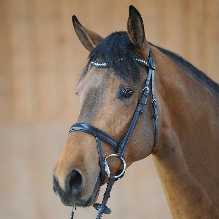 Horse Tack   Saddle Pads   Bridles   Halters   Girths